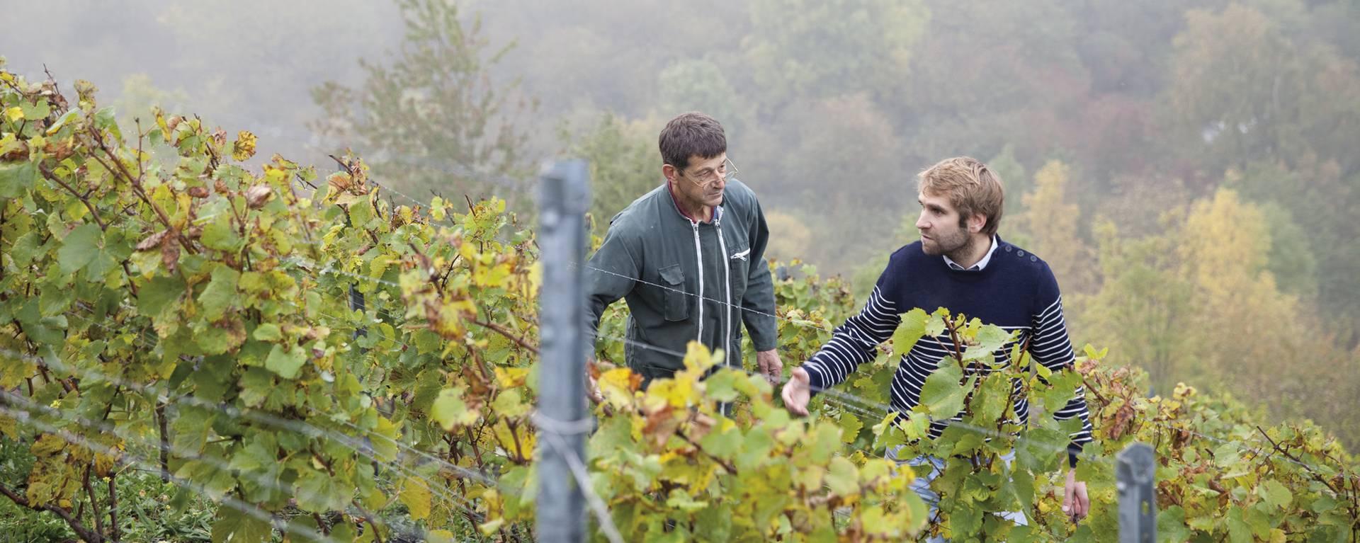 Le viticulteur et ses vignes © Brigitte Baudesson