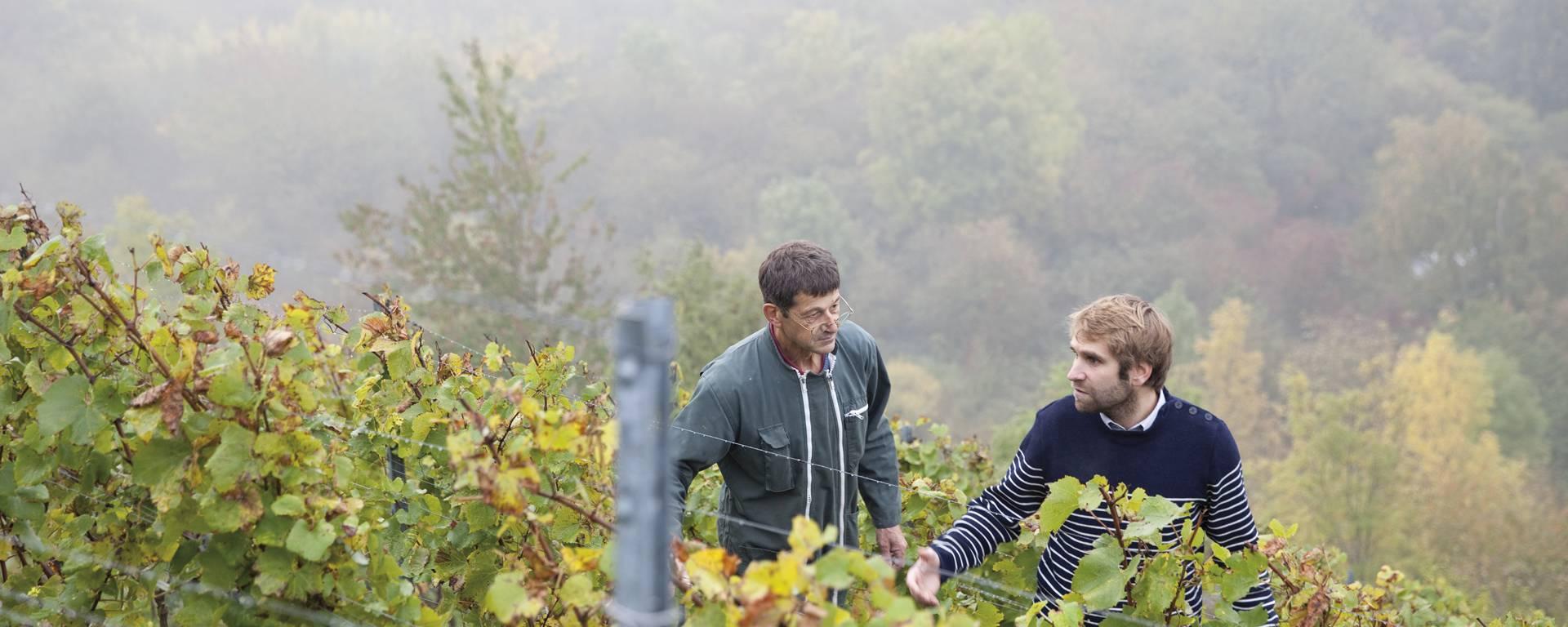 En haut du terril viticole d'Haillicourt © Brigitte Baudesson