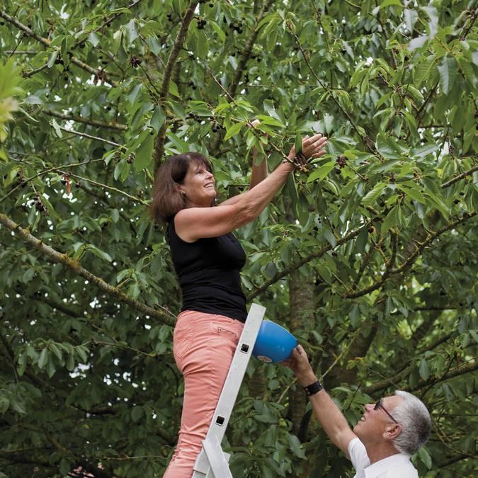 La cueillette des fruits du verger de la Ferme des Saules © Brigitte Baudesson